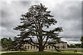 SP9632 : Cedar of Lebanon at Woburn Abbey, Bedfordshire by Christine Matthews