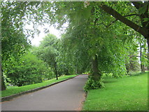 SE2955 : Tree lined path in Valley Gardens Harrogate by peter robinson