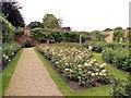 TQ4845 : Rose Garden - Haver Castle by Paul Gillett