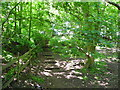 SJ5872 : Woodland Path, Delamere park by John Topping