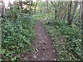 SE9886 : Path through Forge Valley Woods by Barbara Carr