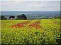 SE7571 : Crop field off Braygate Street by Pauline E