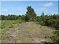 SU9255 : Ash Ranges by Alan Hunt
