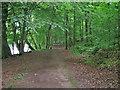 NY1969 : Riverbank footpath by Richard Dorrell