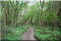 TQ6968 : In Cobham Wood by N Chadwick