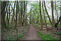 TQ6969 : Footpath in Cobham Wood by N Chadwick