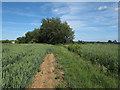 TL6831 : Footpath near Robjohns Farm, Finchingfield by Roger Jones