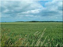 SE4738 : Fields of Battle by Andy Farrington