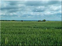 SE4738 : Fields of Wheat by Andy Farrington