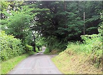 SJ2624 : Entrance to Middle Forest from Wern y Wiel by John Firth