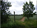 TM3683 : Footpath off Rumburgh Lane by Adrian Cable