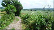 TQ5959 : The North Downs Way leading away from Exedown Road by Marathon