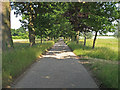 TL6829 : Tree lined bridleway to Bluegate Hall, Great Bardfield by Roger Jones
