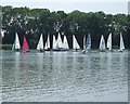 SP8609 : Points Race at Weston Turville Reservoir by Rob Farrow