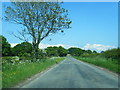 NY4663 : Lane east of Fordsyke by Colin Pyle