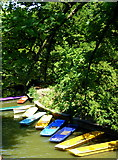 SP5206 : Colourful punts by Magdalen Bridge, Oxford by pam fray