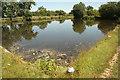 SK6929 : Hickling Basin by Richard Croft