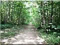 TQ3409 : Path through woods on Richmond Hill by Paul Gillett