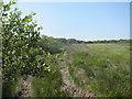 SW7617 : Moorland track above Little Pednavounder by Dr Duncan Pepper