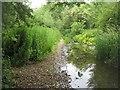 SU5250 : Damp footpath by the River Test by Sandy B