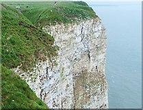TA1974 : Sea-bird colony at Bempton Cliffs by Barbara Carr