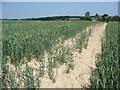 TR0334 : Dry field of wheat, Bilsington by Christine Johnstone