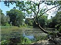 SN4860 : The lake at Llanerchaeron, National Trust by Steve  Fareham