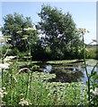 SJ8082 : Fishing Pond by Stephen Burton