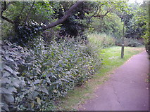 TQ2589 : Path along Mutton Brook, Temple Fortune by David Howard
