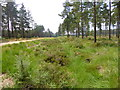 SU1010 : Boveridge Heath, ditch by Mike Faherty
