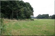 TQ1463 : Edge of Arbrook Common by Hugh Craddock