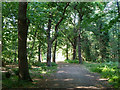 TQ0183 : Woodland track, Black Park Country Park by Robin Webster