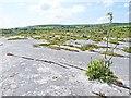 R2899 : Limestone pavement in the Burren by Oliver Dixon