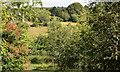 J4453 : Glasswater Wood, Crossgar (2013-4) by Albert Bridge