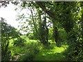 SX4261 : Path around the Marsh by Derek Harper