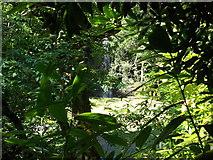 S6144 : Kilfane Waterfall by Joe Burke