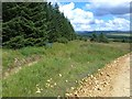 NY7996 : Pennine Way in Redesdale Forest by Oliver Dixon