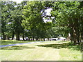 TM1857 : Oak Walk to Helmingham Hall by Adrian Cable