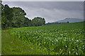 SO5474 : Field edge near Lower Ledwyche by Ian Capper