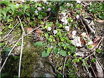 NS2209 : Wood sorrel next to the Swinston Ponds by Humphrey Bolton