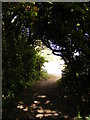 TM3387 : Footpath to the Lane by Adrian Cable