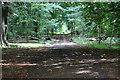 TF2494 : Track into Scallows Hall Plantation by J.Hannan-Briggs