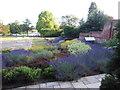 SU7074 : A beautiful walled garden by Virginia Knight