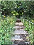 SE1421 : Steps - Rosemary Lane by Betty Longbottom