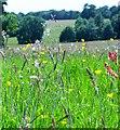 TQ6331 : Grass and buttercups, Wadhurst Castle by nick macneill