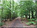 TQ2130 : Bridleway, St. Leonard's Forest by Robin Webster