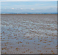 SD3550 : Tide out Preesall Sands by wfmillar