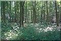 SE6972 : Thurtle Wood by Mick Garratt