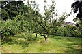 SD4615 : The Orchard at Rufford Old Hall by Jeff Buck