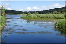 SD4874 : Main channel through the reedbed at Leighton Moss by Mike Pennington